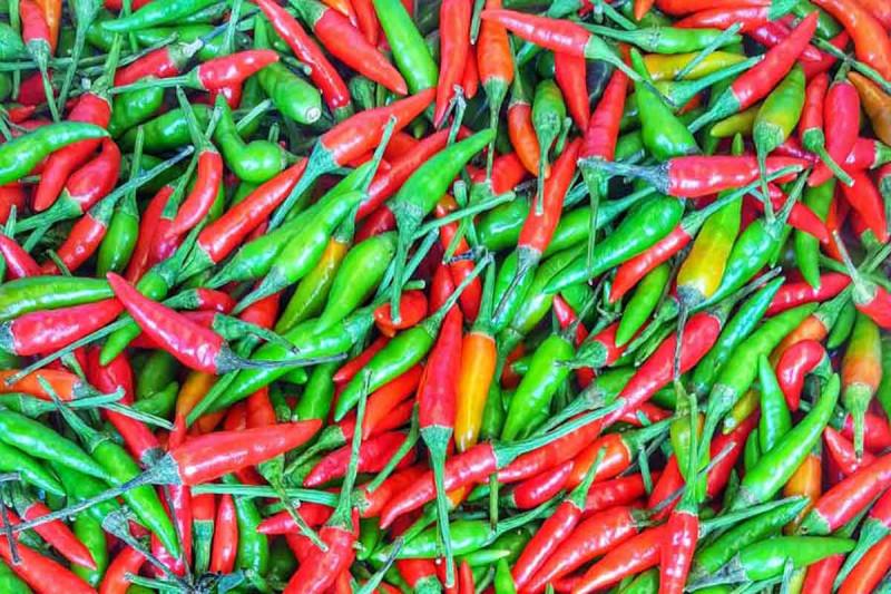 Chili Chilischoten rot gruen Bremer Gewuerzhandel