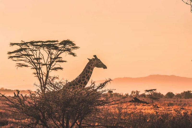 laenderkueche afrikanisch bremer gewuerzhandel